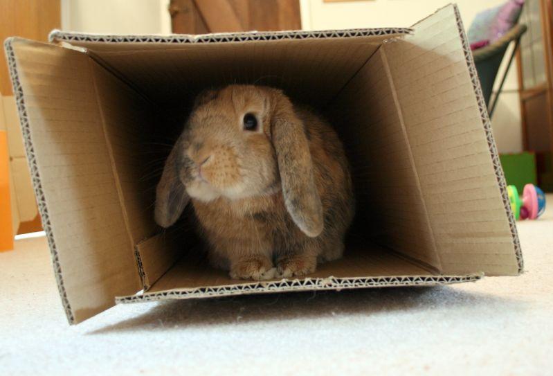 hrana za zečeve